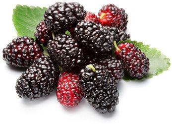 Варенье из шелковицы: полезные свойства и противопоказания
