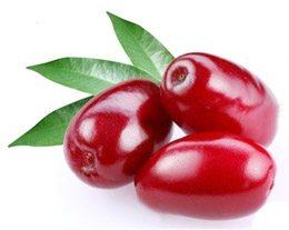 Кизил; польза и вред применения ягод